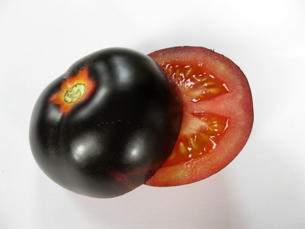 A ripe OSU Blue fruit, with red skin and flesh underneath the black skin