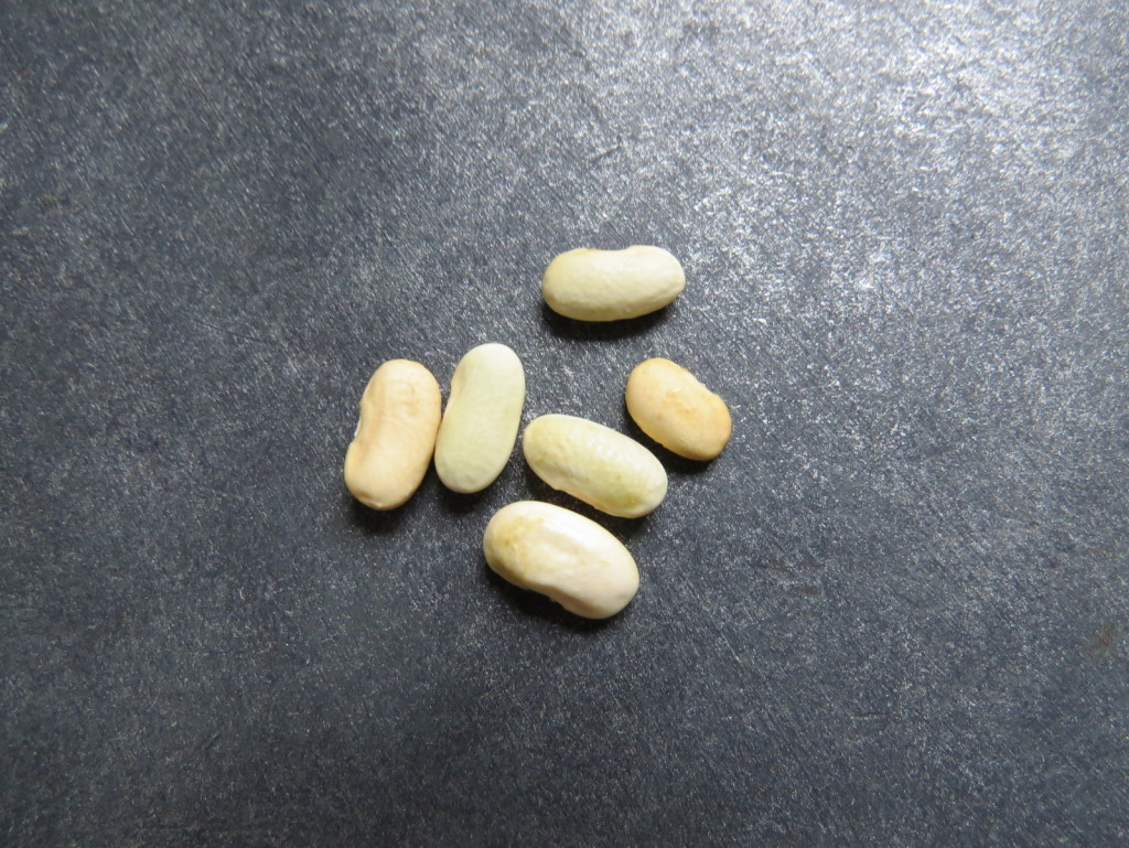 Seeds. Picture Jayb