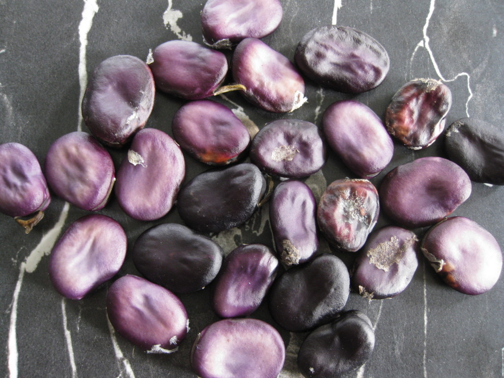 Dried Vitelotte Beans. Picture Jayb